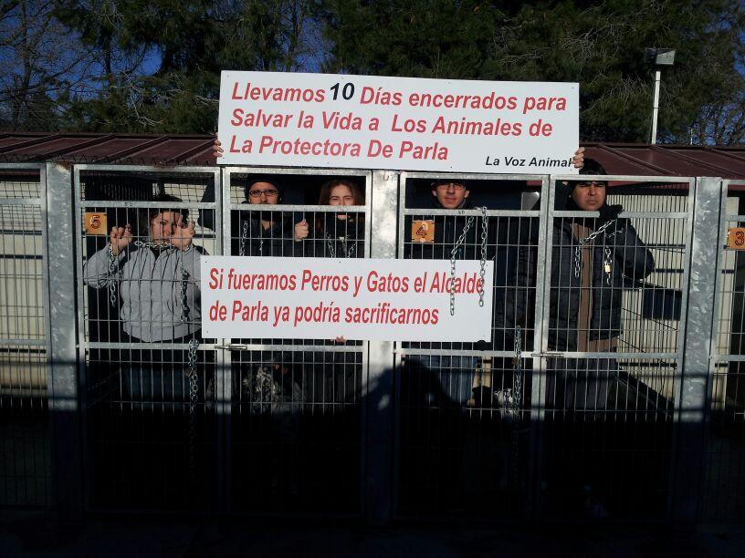 22 días encerrados por los animales en la perrera de Parla