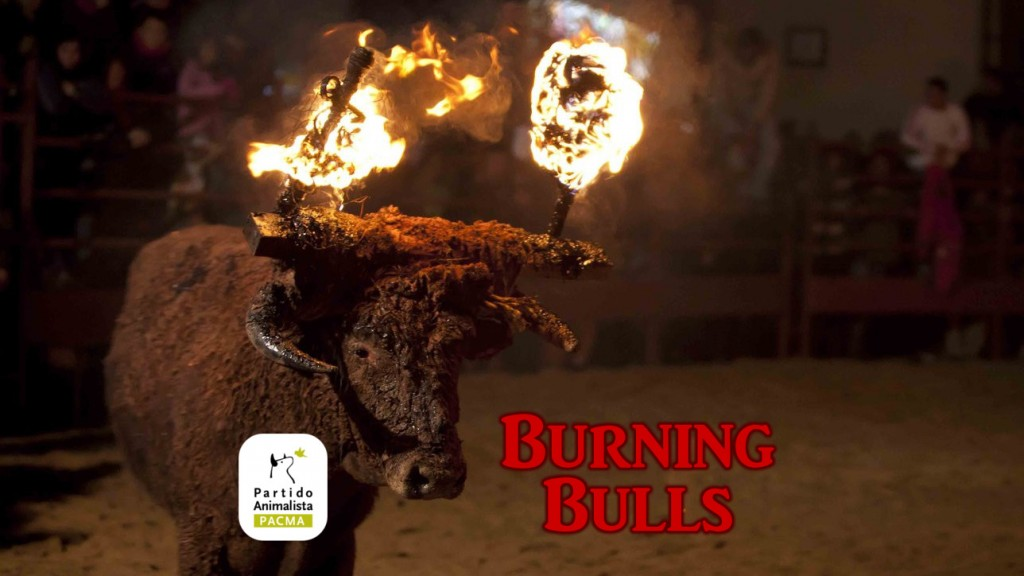 Burningbulls