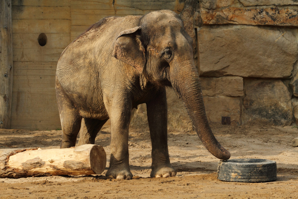 Circos y zoológicos