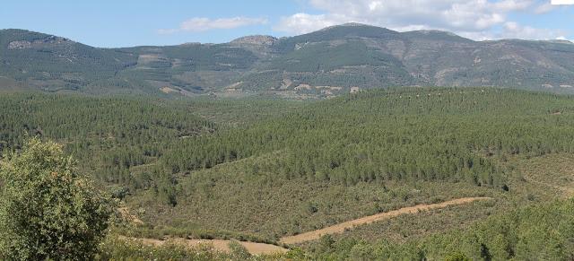Cospedal planea privatizar montes públicos para hacer cotos de caza