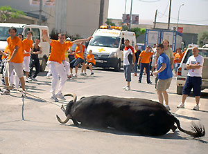 Denuncia al Ayuntamiento de Amposta por graves infracciones en sus correbous