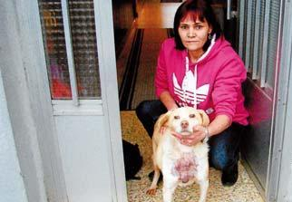 Dos casos de violencia de género y maltrato animal