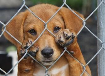 Gran Canaria: Charla sobre el maltrato animal