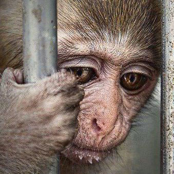 Should animals be kept in cages?