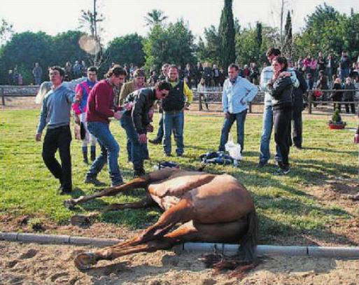 Muere extenuado un caballo en una prestigiosa carrera de hípica en Vila-Seca