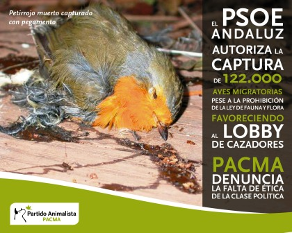 PACMA alerta de la caza indiscriminada de aves migratorias en España