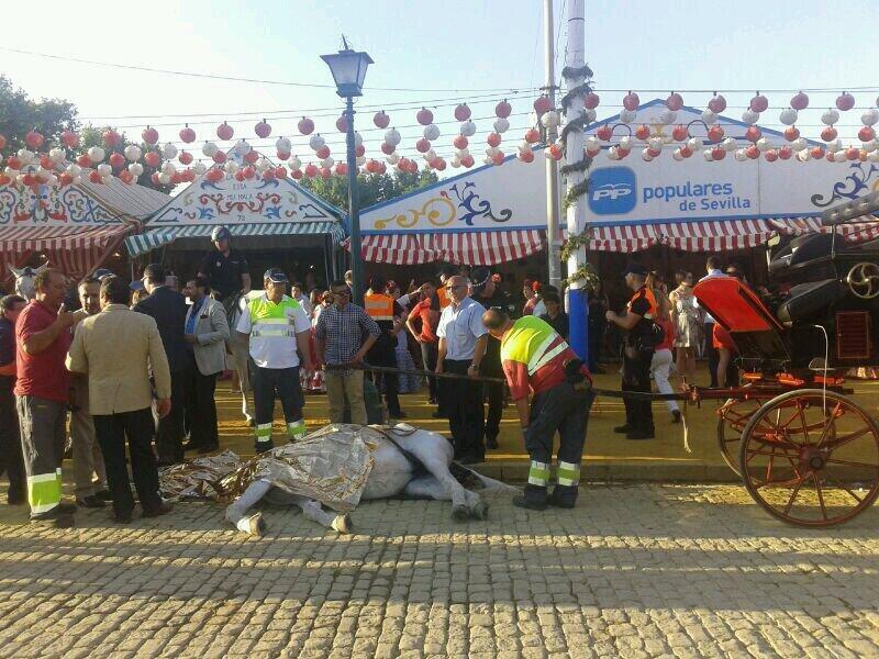 PACMA denuncia la muerte de un caballo en plena Feria de Sevilla