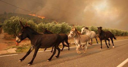 PACMA exige un protocolo de evacuación de animales en las catástrofes