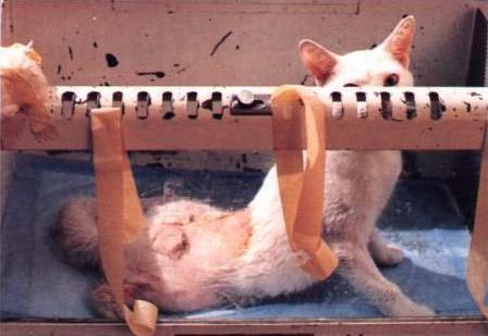 PACMA rechaza la creación de un nuevo centro de experimentación animal en Lugo