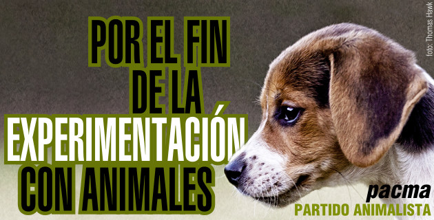 Reforma en la Ley de Experimentación animal ¿beneficio para los animales?
