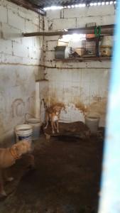 zulos perros Malaga