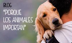 Partido Animalista – PACMA – Somos el Partido Animalista