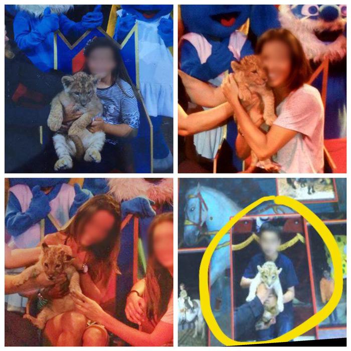 cachorros león circo taliano