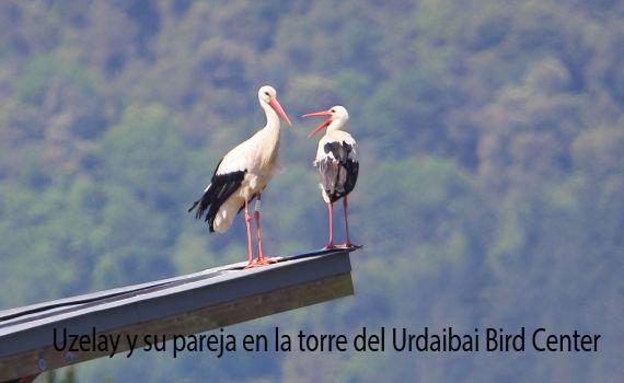 Uzelai y su pareja sobre el_Bird Center