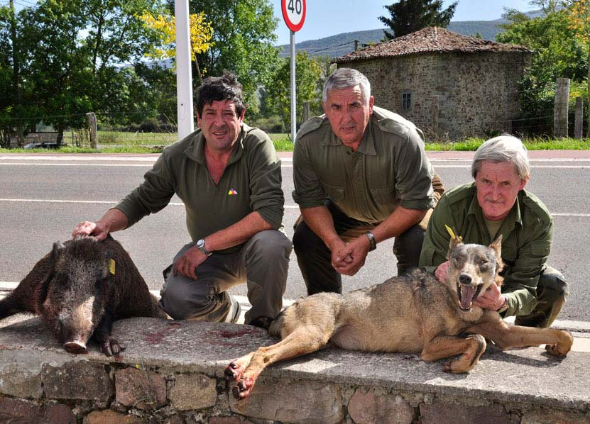 lobo y jabali asesinados