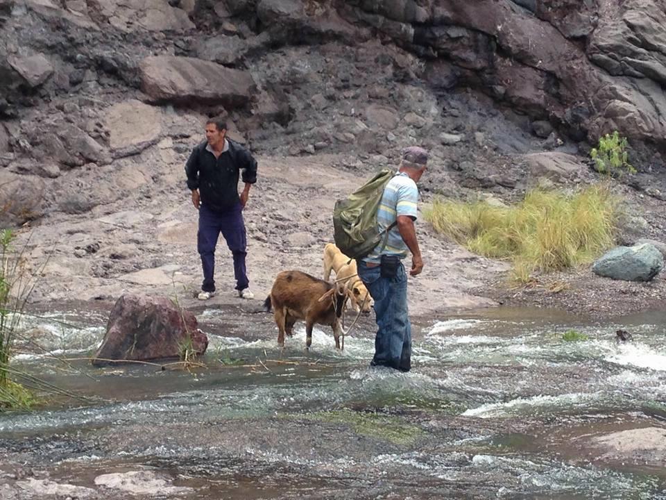 Rescate de cabras