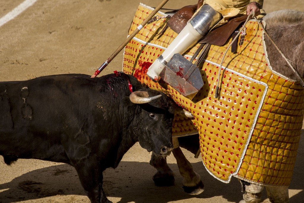 tauromaquia, san isidro, #SanIsidroComPasion, corrida toros, PACMA