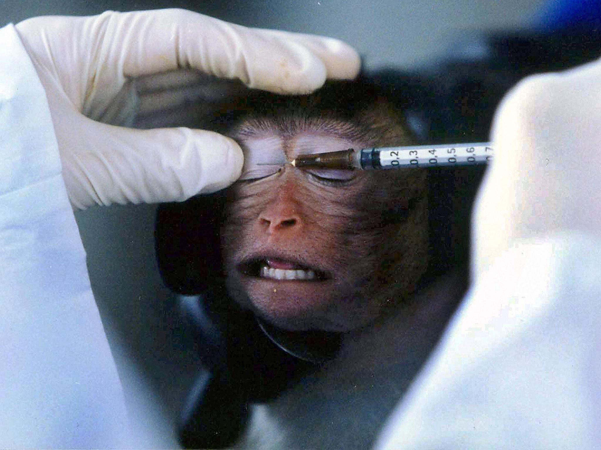 animal-testing-blogs