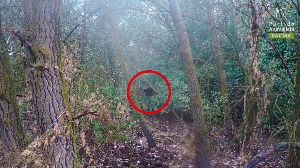 Pelado escondido en arbustos