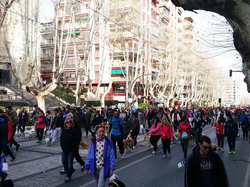 PACMA paseo proadopcion Jaen
