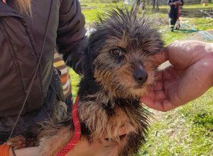 Rescate perra pozo bomberos Córdoba