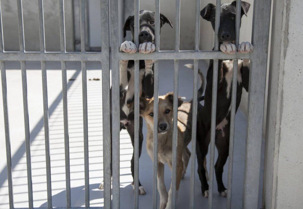 Perros del CPA Madrid