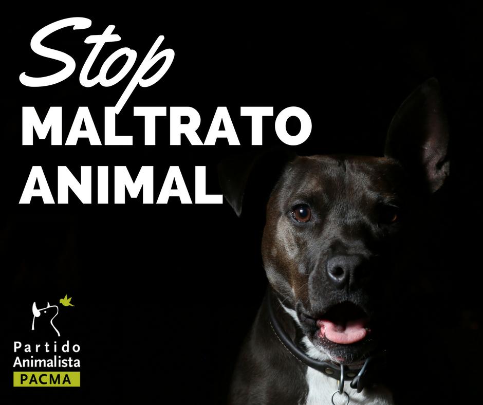 STOP maltrato animal