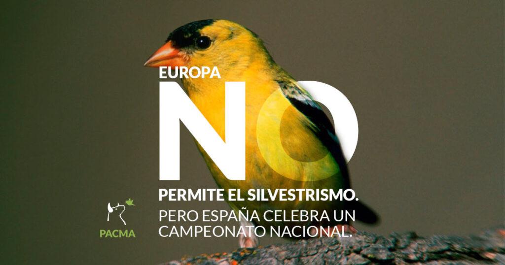 Europa no permite el Silvestrismo, pero España celebra un Campeonato Nacional