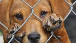 La nueva Ley de Protección y Bienestar Animal de Cantabria se queda corta