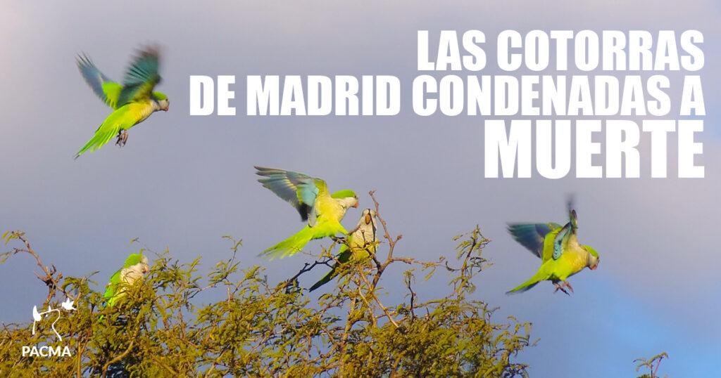 Las cotorras de Madrid condenadas a muerte