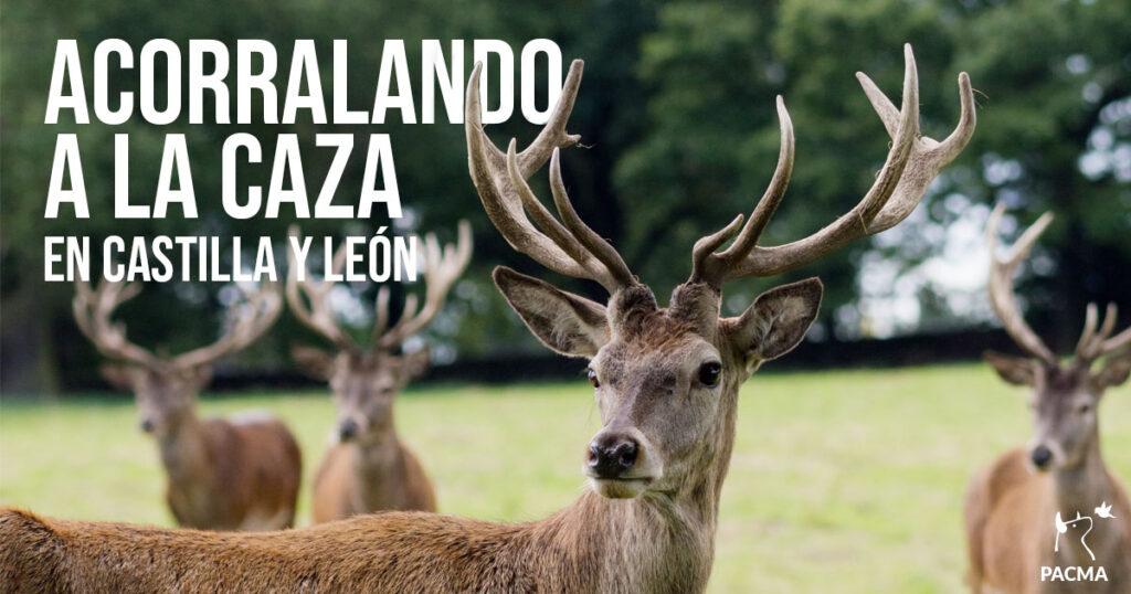 PACMA continúa su batalla legal para acorralar la caza en Castilla y León