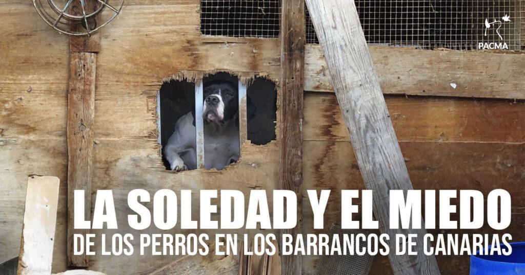 La soledad y el miedo de los perros en los barrancos de Canarias