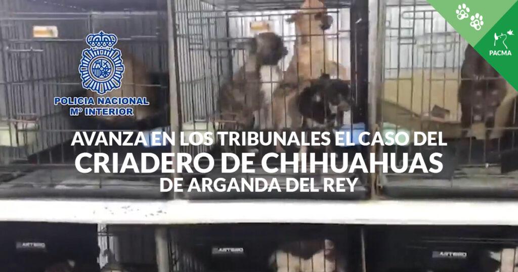 Imagen de chihuahuas hacinados en jaulas. Superpuesto, el texto: Avanza en los tribunales el caso del criadero de chihuahuas de Arganda del Rey
