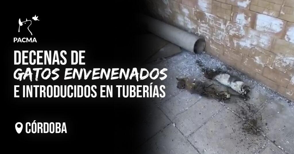 15 gatos de una colonia de Córdoba envenenados e introducidos en tuberías