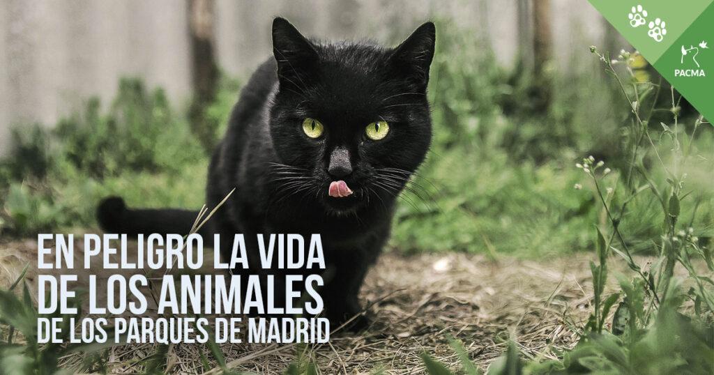 Los animales que viven en los parques de Madrid, en peligro