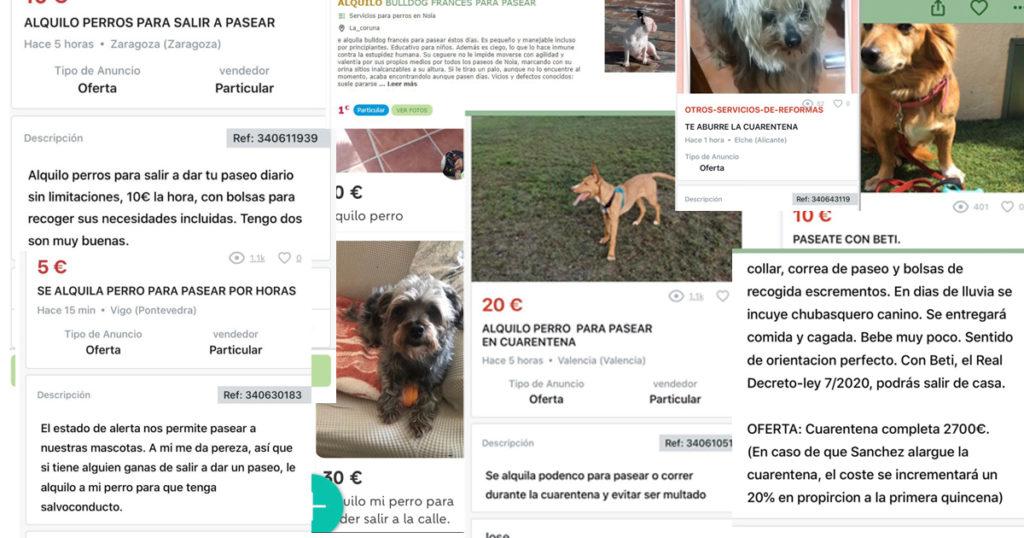 Personas que alquilan a sus perros durante el estado de alarma
