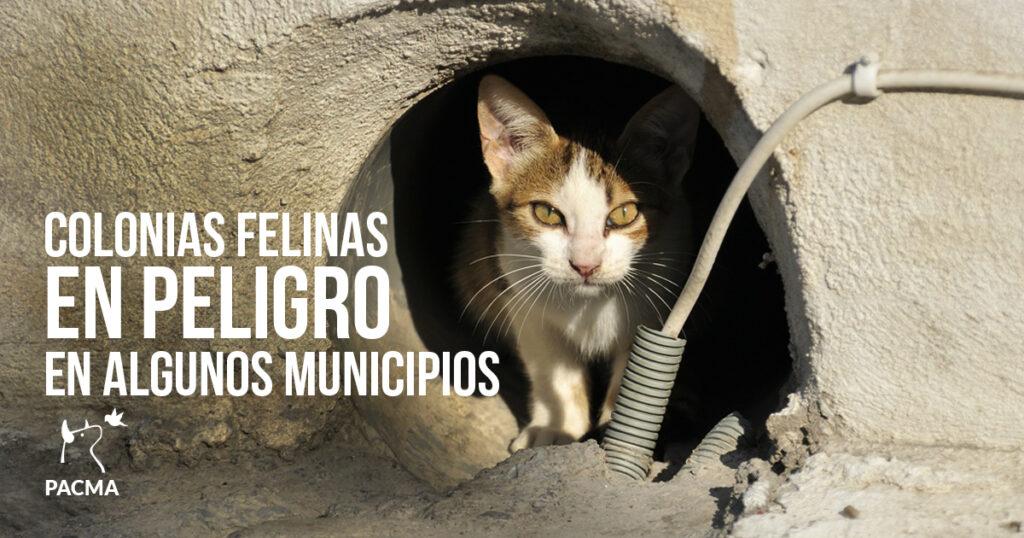 Los gatos de las colonias felinas de algunos municipios están en peligro