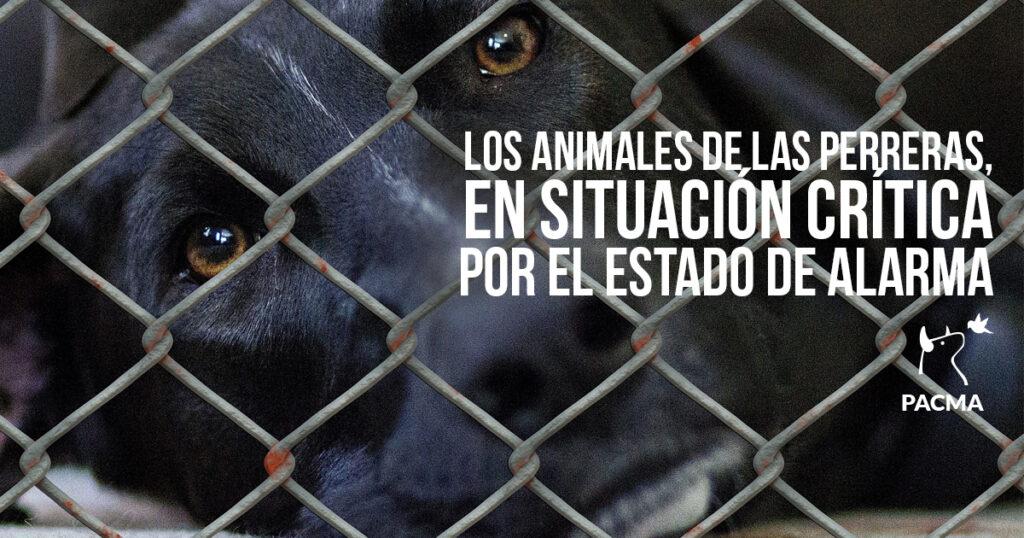 Los animales de las perreras, en peligro por la falta de voluntariado
