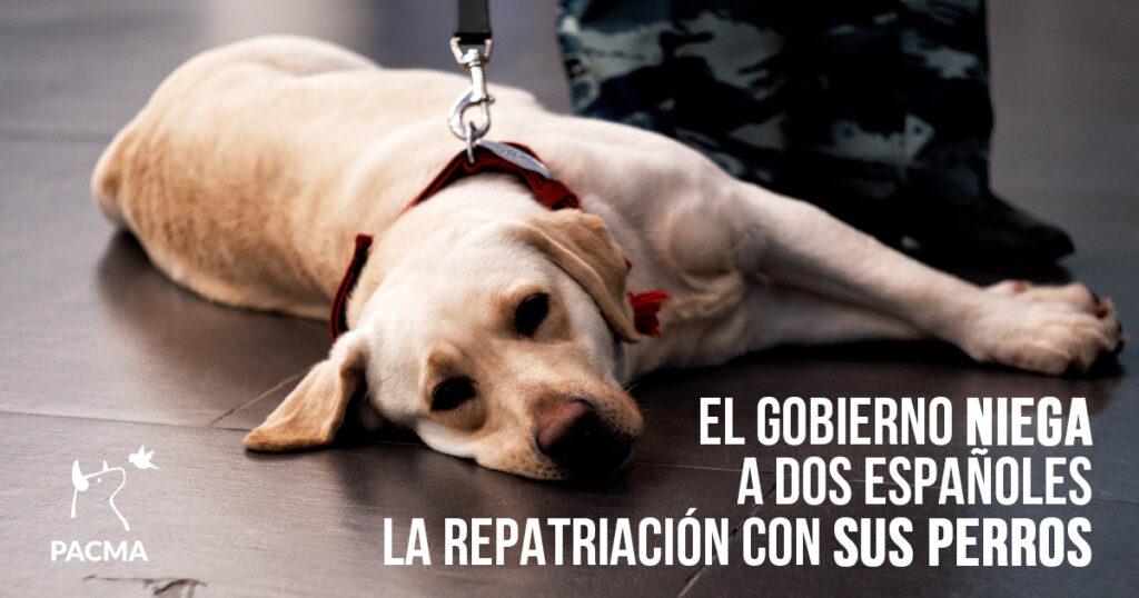 El Gobierno niega a dos españoles la repatriación con sus perrosEl Gobierno niega a dos españoles la repatriación con sus perrosEl Gobierno niega a dos españoles la repatriación con sus perros