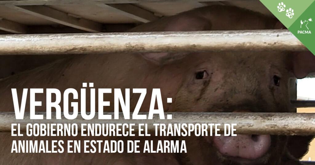 Denunciamos el endurecimiento del transporte de animales vivos en el estado de alarma