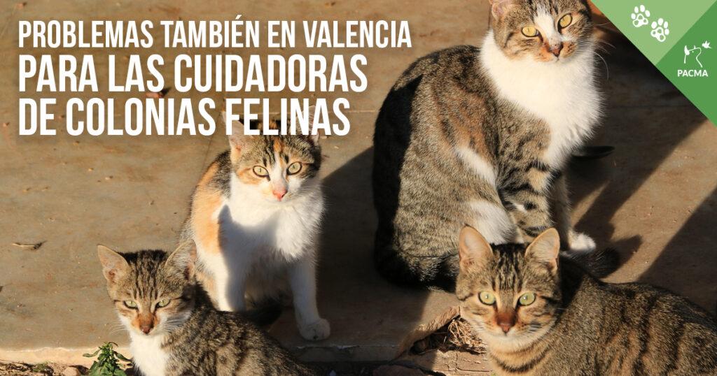 Problemas en Valencia para las cuidadoras de colonias felinas