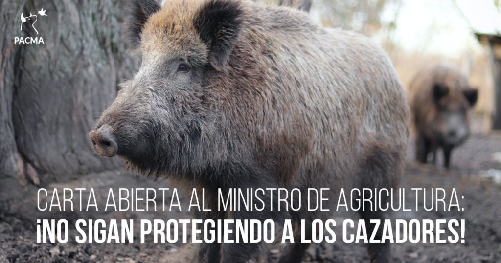 Carta abierta al ministro de Agricultura: ¡No sigan protegiendo a los cazadores!