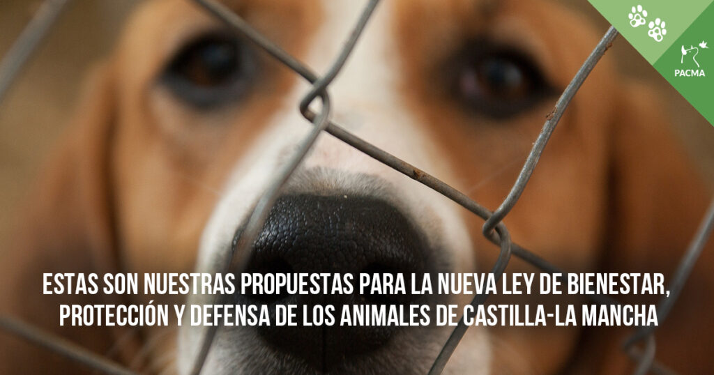 Estas son nuestras propuestas para la Ley de Bienestar, Protección y Defensa de los Animales de Castilla-La Mancha