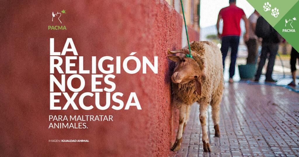 La religión no es excusa para maltratar animales