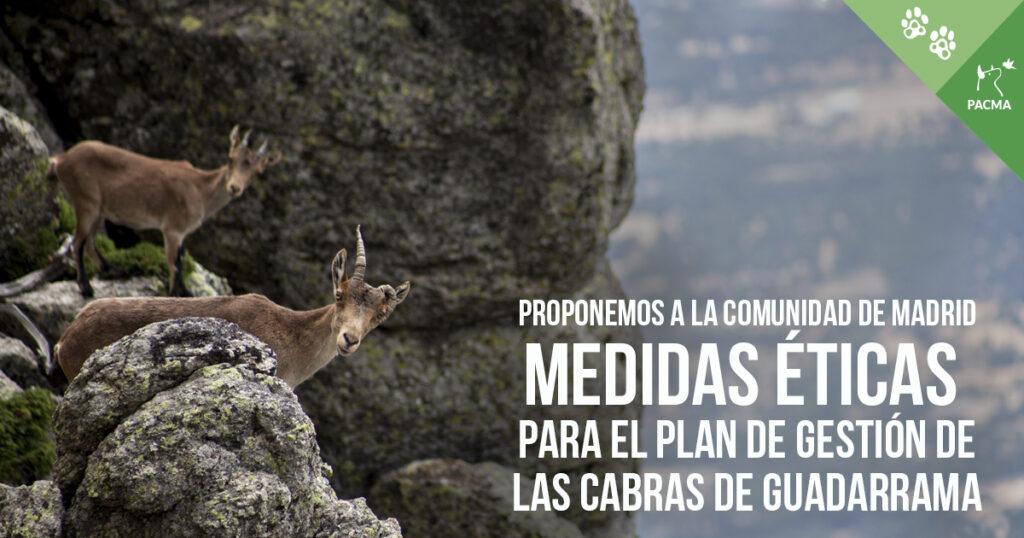 Medidas éticas para el plan de gestión de las cabras de Guadarrama