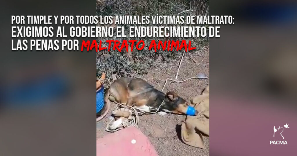 Por Timple y por todos los animales: exigimos el endurecimiento de las penas por maltrato
