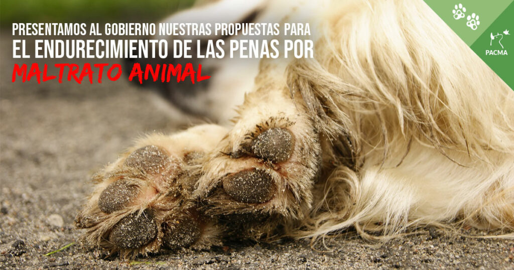 Presentamos al Gobierno nuestras propuestas para el endurecimiento de las penas por maltrato animal
