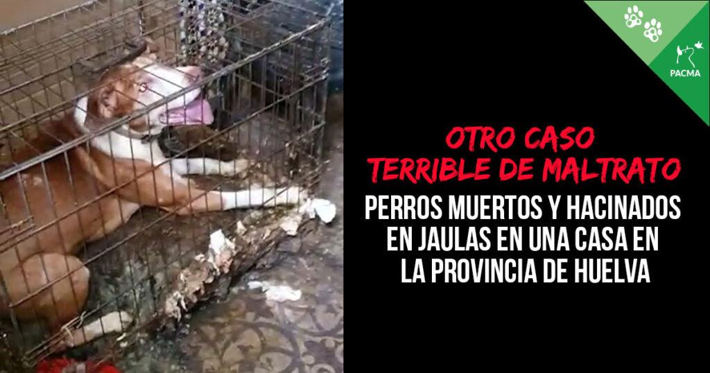 Perros muertos y hacinados en jaulas en Rociana del Condado