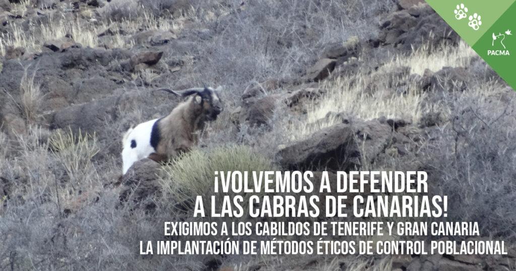 Exigimos a los Cabildos de Gran Canaria y Tenerife la implantación de métodos éticos de control poblacional para las cabras