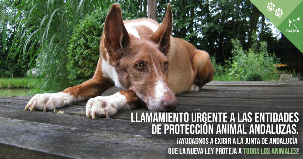 Llamamiento urgente a las entidades de protección animal andaluzas